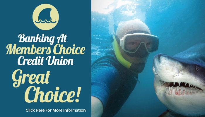 Great Choice – Shark Cover